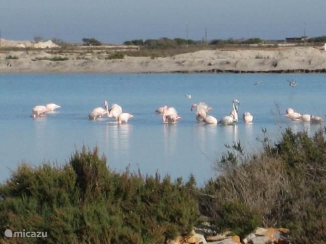 De zoutmeren bij Alicante