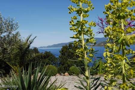 Ferienwohnung Frankreich – ferienhaus Villa Arbousier Calcatoggio