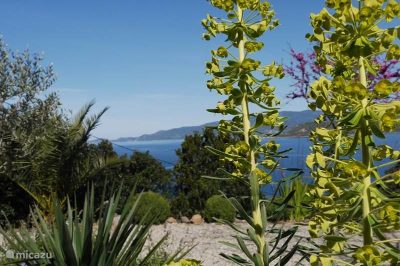 Vacation rental France, Corsica, Calcatoggio Holiday house Villa Arbousier Calcatoggio