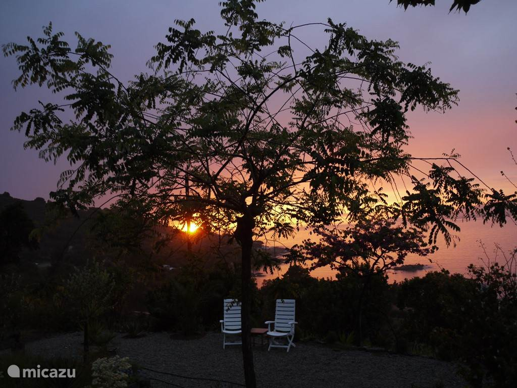 Sunset in the garden with the beautiful Sophora