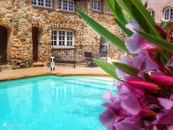 Zwembad detail met orleanders