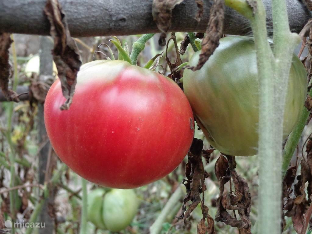 Ook de tomaten ontbreken niet.