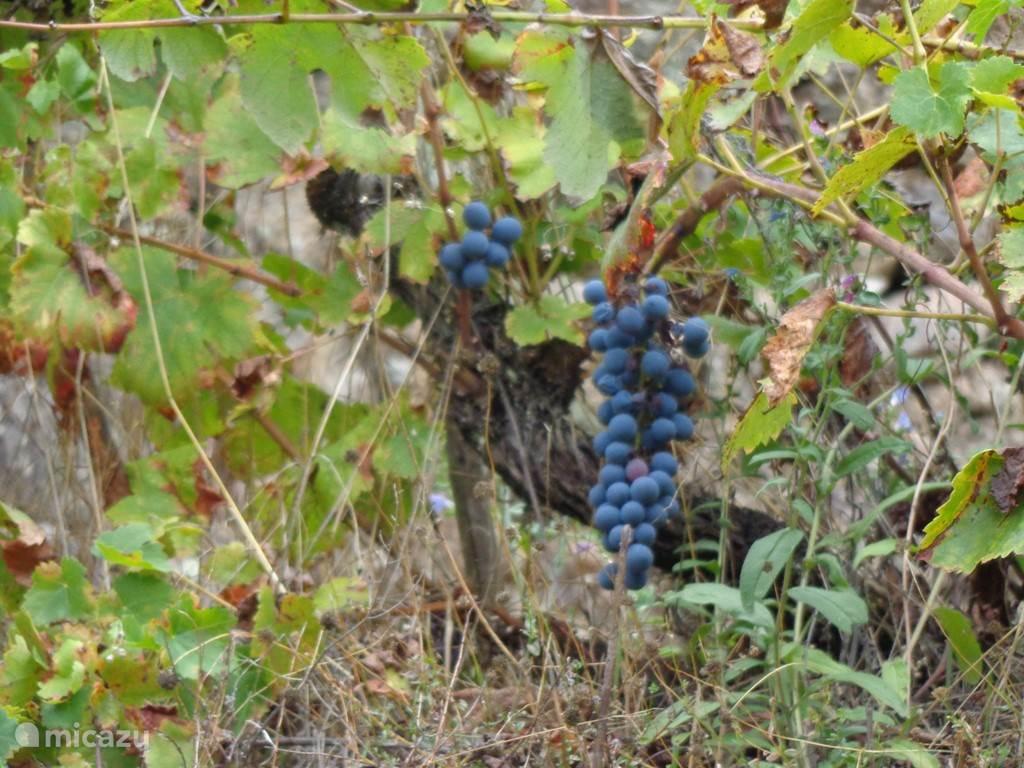 En natuurlijk eigen druiven.