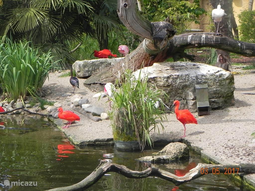 Attractiepark en dierentuin