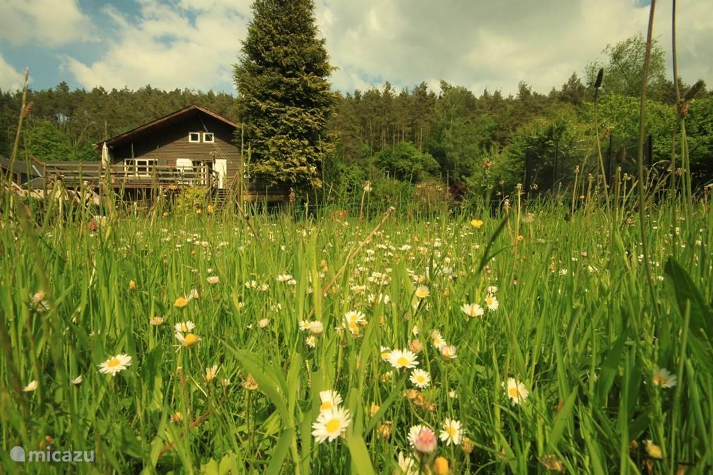 Ferienwohnung Belgien, Ardennen, Vencimont Ferienhaus Villa Vencimont
