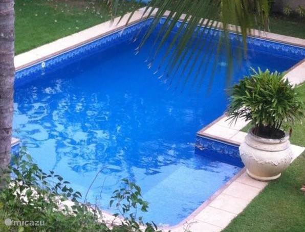 The green garden with beautiful palm trees includes a new pool. The swimming pool consists of two parts. The front has built stairs to a shallow part which is suitable for small children. The pool is cleaned every day. The cleaning will be performed free of charge.