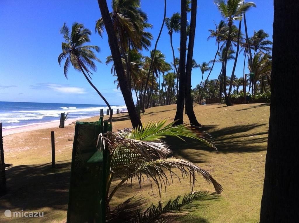 Op 350 meter van Paradise Beach is het mooie zandstrand met prachtige palmen gesitueerd. Onder de palmen loopt een smalle boulevard waaraan enige terrasjes en bars zijn te vinden.