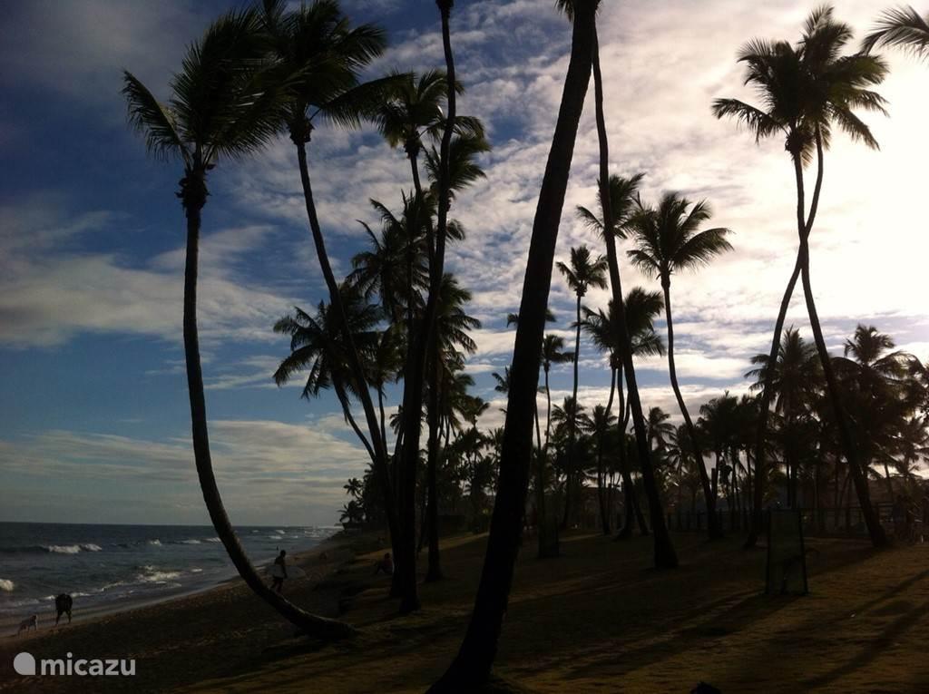 Het prachtige strand opnieuw vastgelegd op de foto. Dit is allemaal te vinden op 350 meter van Paradise Beach.