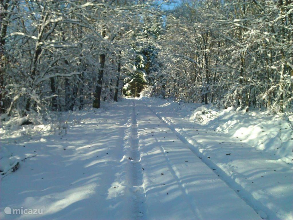 Winterse omgeving