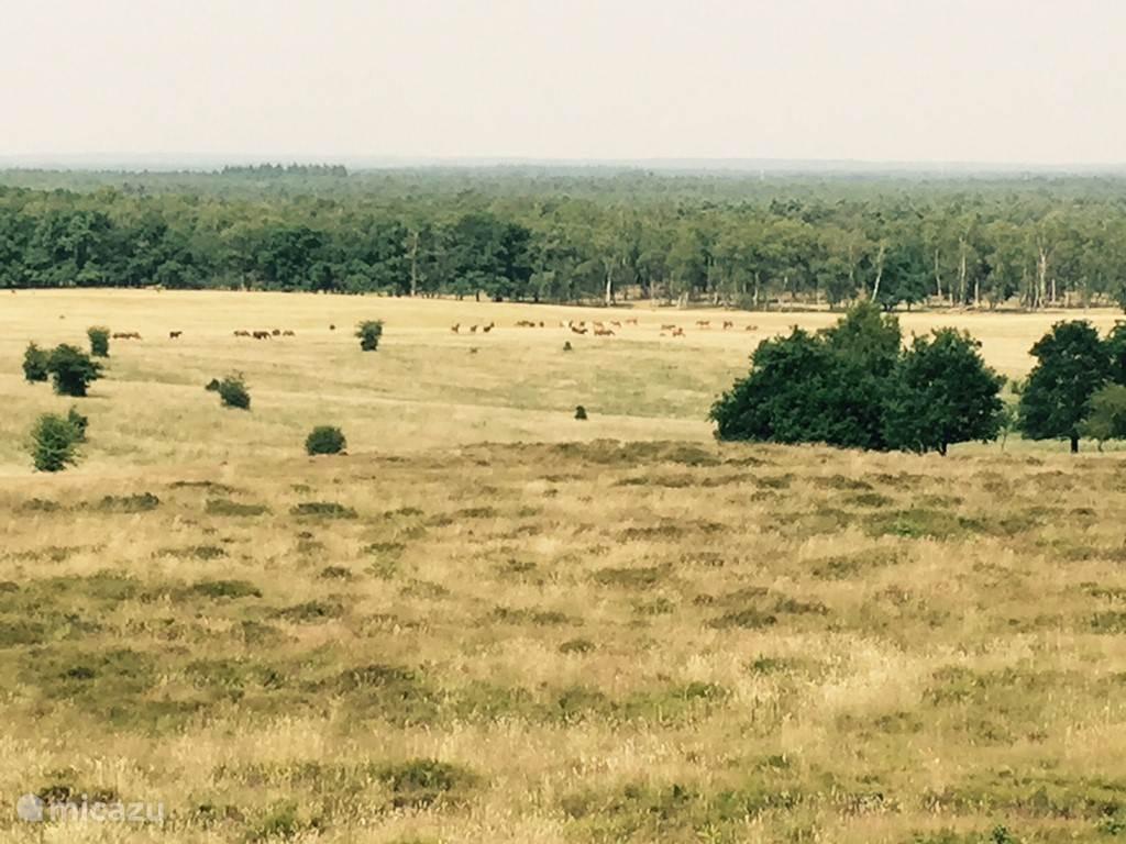 Met bos, heide en de schitterende Veluwe vlakbij, waar de paarden nog in het wild leven...