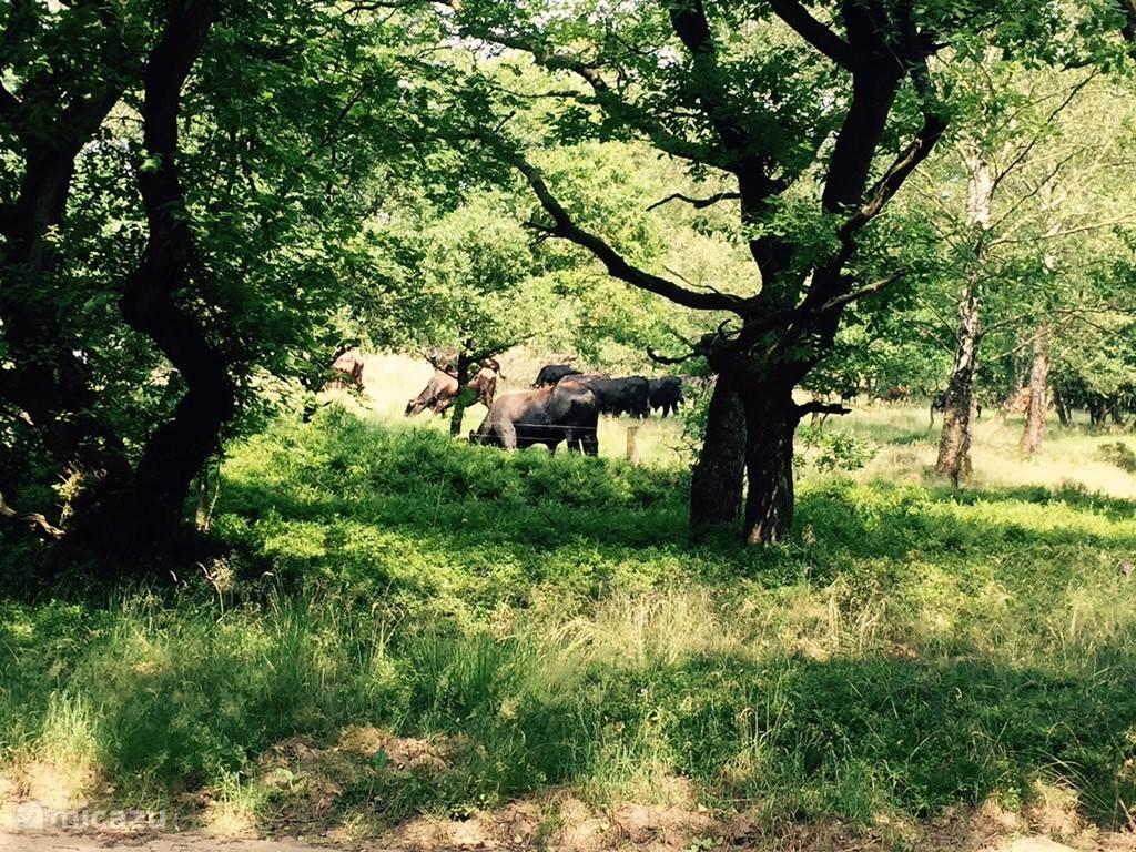 Maar ook wilde runderen, zwijnen en nog veel meer natuurschoon om de hoek van deze schitterende chalet....