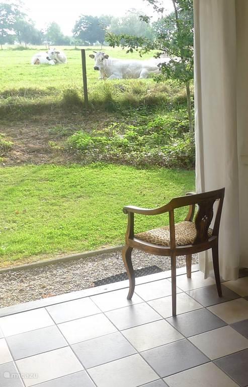 Lekker de terrasdeuren open en genieten van het uitzicht en de koeien! Inmiddels ligt hier een mooi terras met haagjes eromheen.