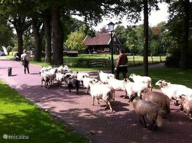 Vakantiehuis Nederland, Drenthe, Coevorden Vakantiehuis Vakantiehuisje Zweeloo De Kapschuur