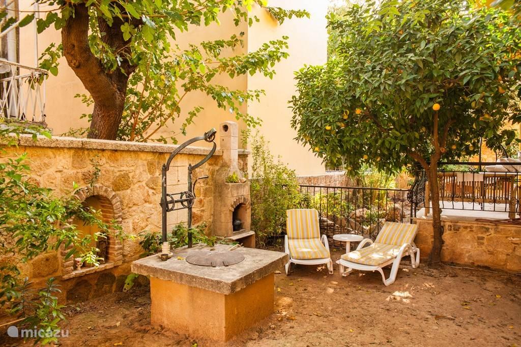 Rustgevende tuin (recent gazon aangelegd) met BBQ en sinaasappelboom