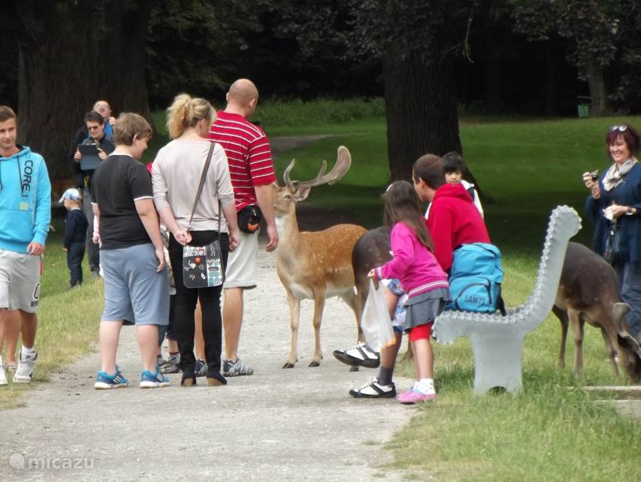 Lekker de herten voeren in het Kasteelpark  van Blatna dat vrij te betreden is. Uniek is dat u hier zelf tussen de herten staat en zij u uit de hand eten.