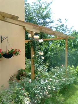 de veranda met rozen en privetuin bij appartement Dante