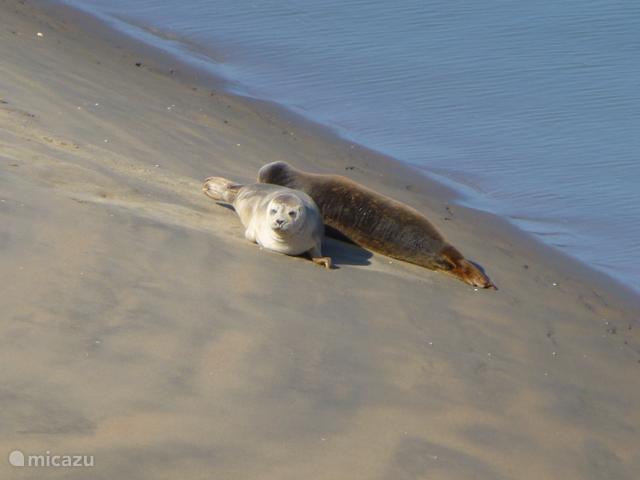 De zeehonden laten zich regelmatig zien.