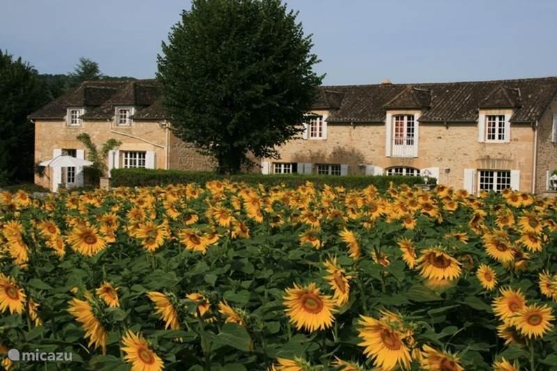 Vakantiehuis Frankrijk, Dordogne, Saint-Vincent-de-Cosse Gîte / Cottage Le Pinson