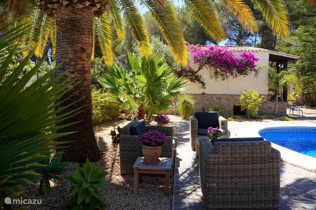 Loungeset onder de palmboom. Heerlijk om aan het einde van de dag te zitten.