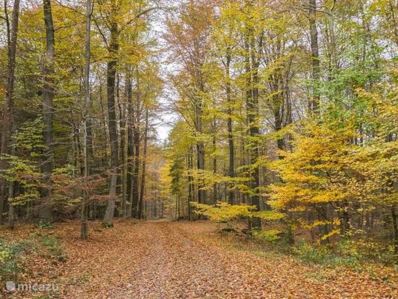herfstpracht in het natuurgebied het Lonnerbecke