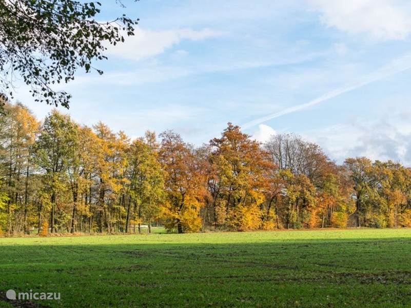 fraaie herfst kleuren