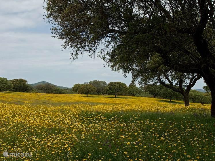 Voorjaarslandschap in Extremadura