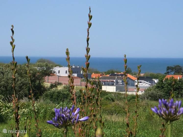 de omgeving is natuur, rust en een beetje zee lucht