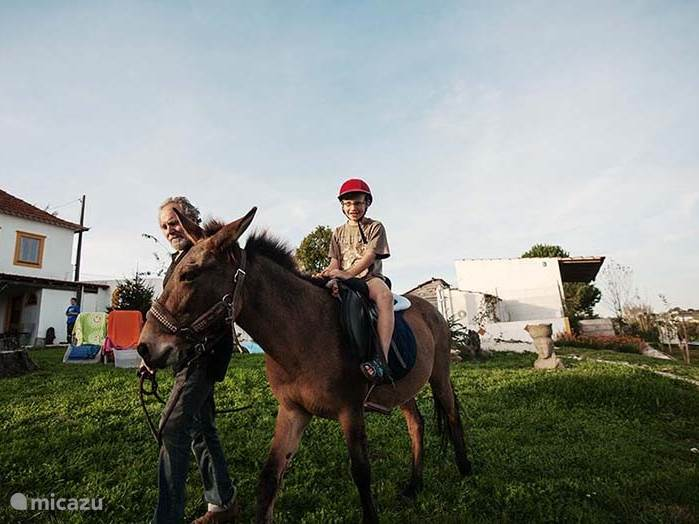 Kinderen kunnen een ritje op onze muilezel Chamoor, of op onze ezel Caroche maken.