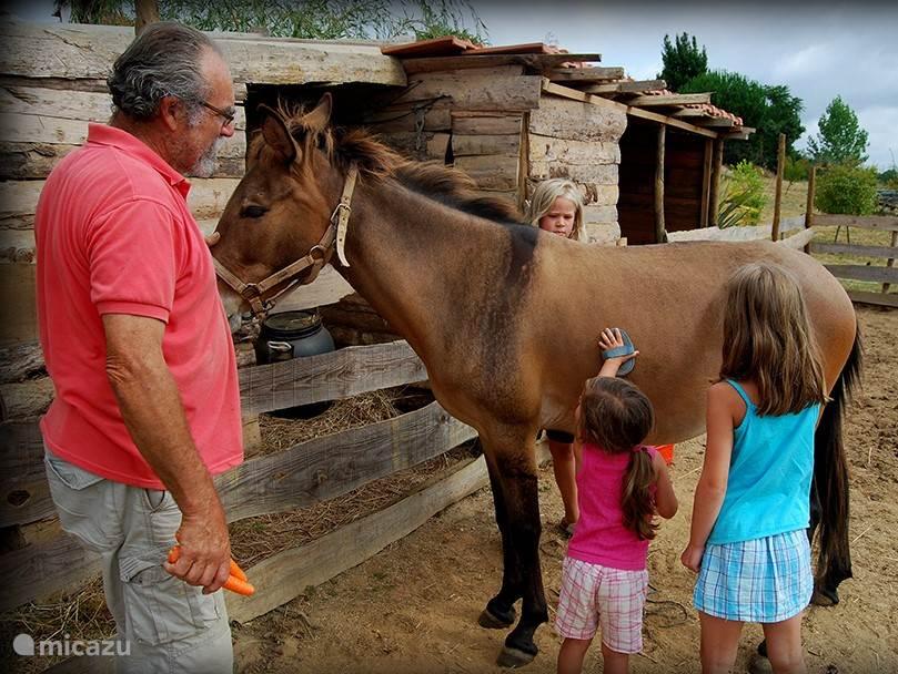 We hebben veel dieren die je mag helpen verzorgen als je wilt