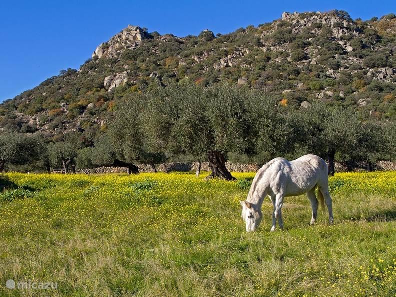 December 2014. Winterlandschap in Extremadura.