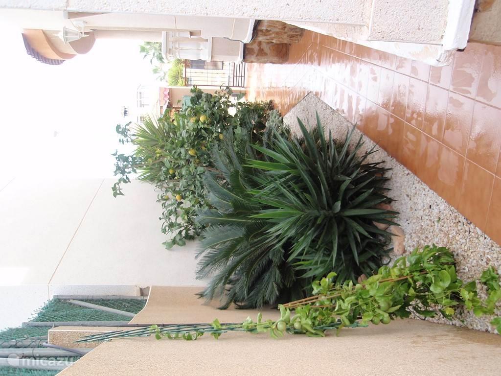 De irregatie doet goed werk! Citroenenboom, madarijnenboompje, passiflora, rozen, .... Een klein hofje van 'Eden' ...