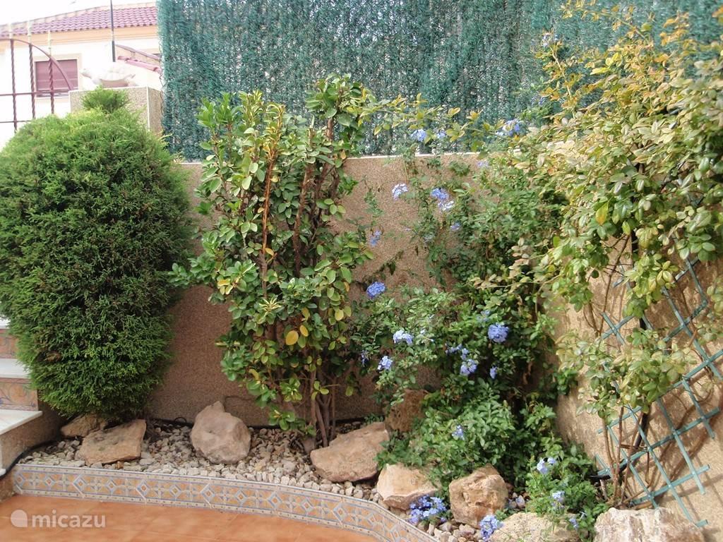 De tuinmuur is begroeid met blauwe vlinderbloemen en trekken vlinders aan. Zij houden je gezelschap.