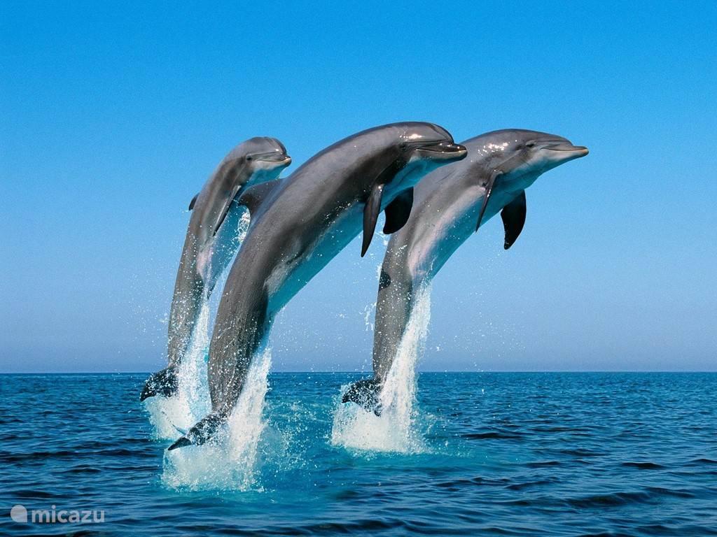 Sea aquarium met dolfijnen, zee schildpadden, zeehonden en vele dieren van de onderwaterwereld.