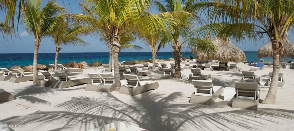 In een paar minuten lopen bent u op het heerlijke strand van Jan Thiel