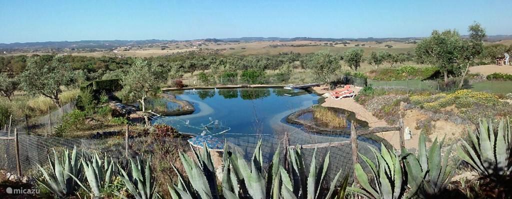 Uitzicht over biologisch zwembad en vergezicht over olijf- en kurkeiken.