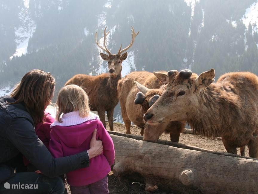 Aurach Wildlife Park 25 km away while feeding animals