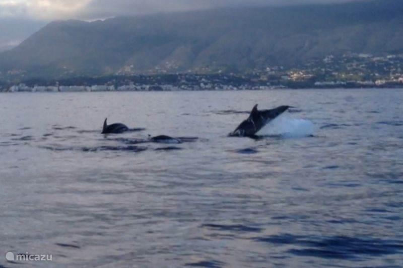 Dolfijnen spotten in Oktober.