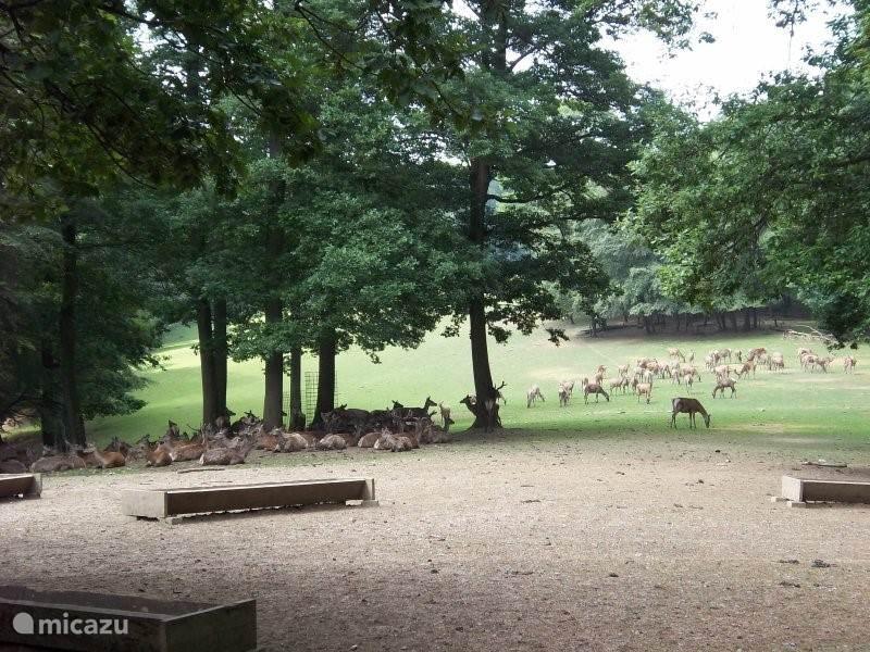 Wild belevenis park Daun. Met een auto door het park, onderweg de dieren voeren. Rood wild, wilde zwijnen, apen, roofvogels en nog veel meer andere dieren.