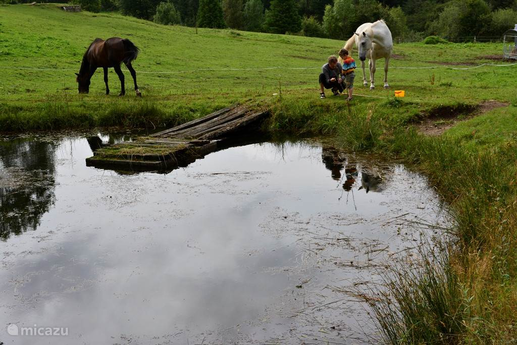 In de weide is er plaats voor uw paard.