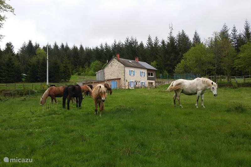 Vacation rental France, Creuse, Royère-de-Vassivière Holiday house Le Puy des Bruges