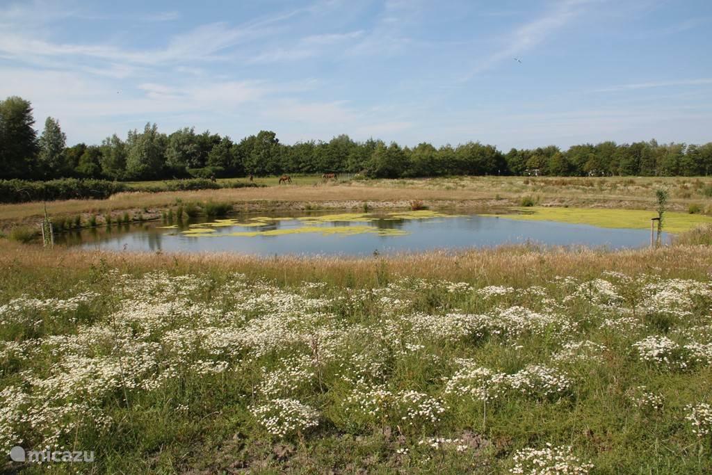 Het Duinpark is ingericht met fruitbomen,houtsingels, duintjes, verruigde terreindelen, een poel en schelpenpaden.