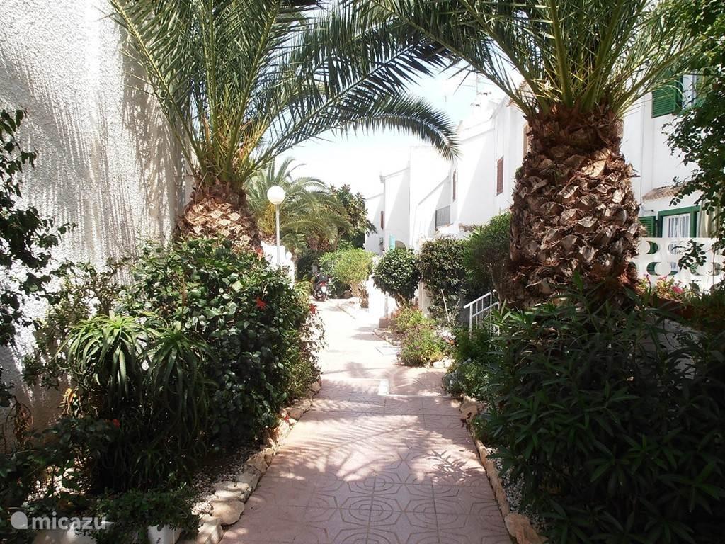 Het gezellig wandel padje naar het huis
