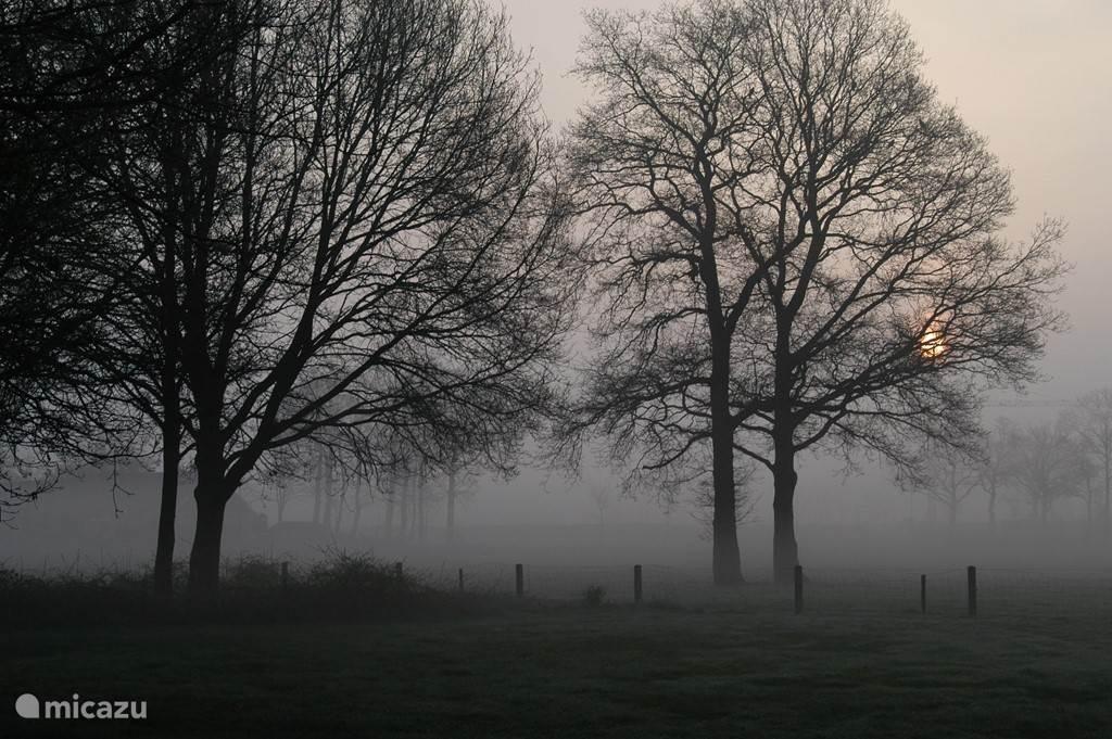 Achteruitzicht in de mist