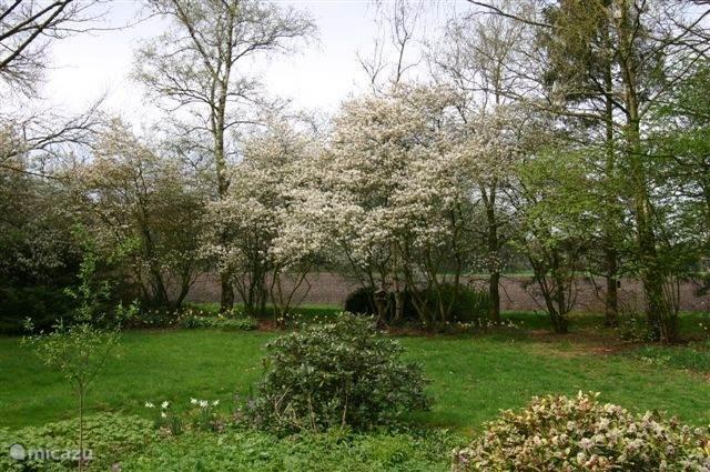 Tuin in mei met bloeiende krentenbomen