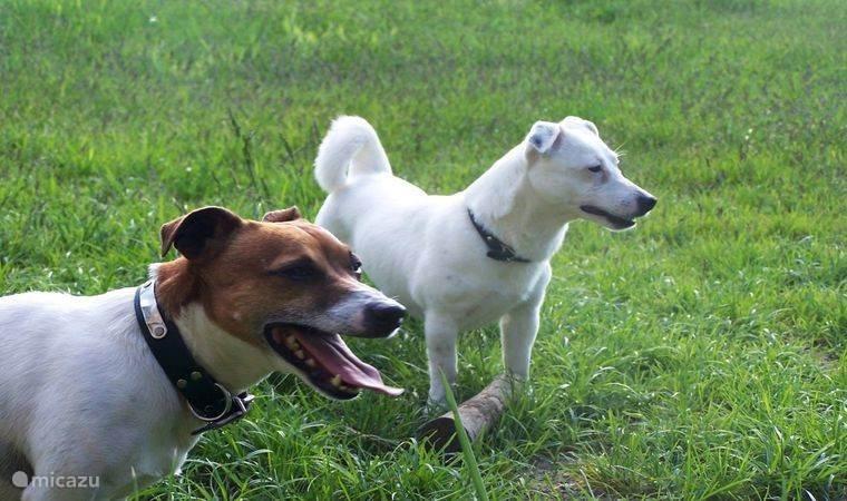 Honden zijn ook van harte welkom. De tuin is niet omheind!!!