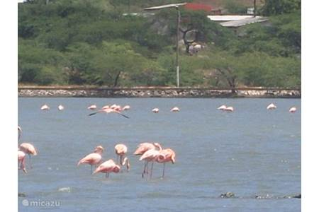 Appartement milas guesthouse in boca st michiel curacao midden curacao huren - In het midden eiland grootte ...
