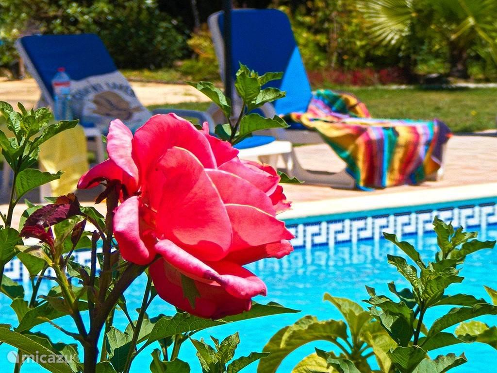 Ontspannen in een oase van rust en schoonheid.