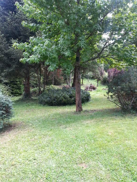 Enclosed woodland garden, ideal for dogs!
