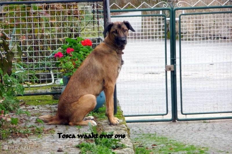 Tosca houdt van mensen.