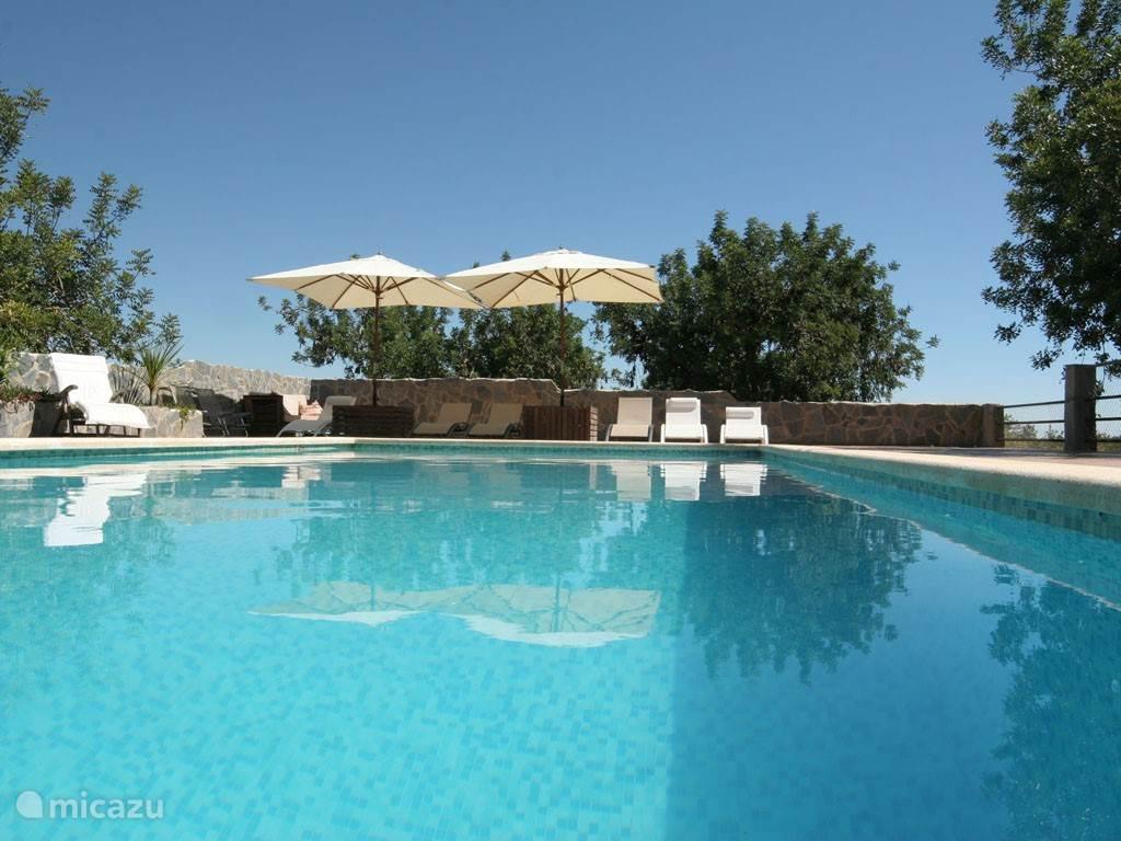 Het zwembad met ruim terras